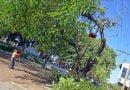 Tareas de poda, raleo y corte de árboles en distintos puntos de la ciudad
