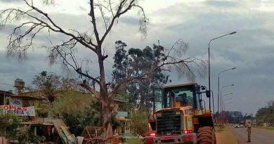 Personal Municipal ejecuta corte y poda de árboles