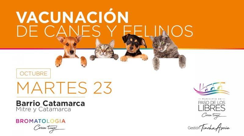 Mañana vacunación de perros y gatos en Barrio Catamarca