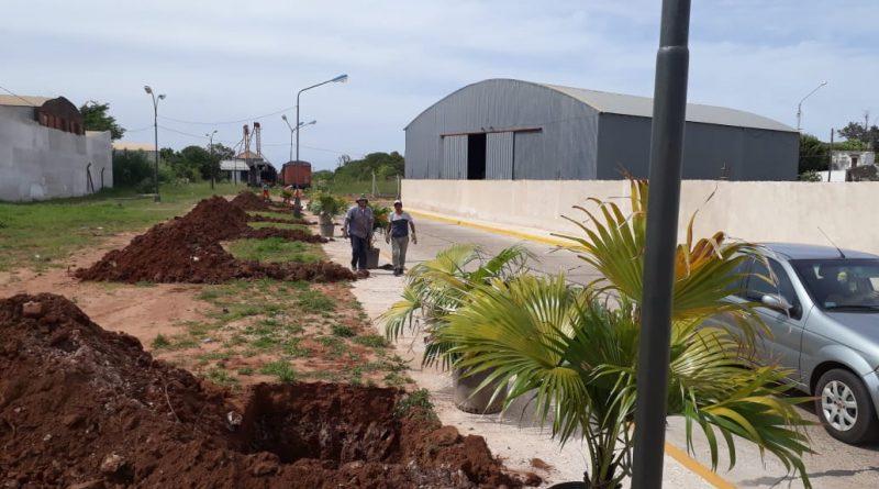 Avanzan los trabajos de parquización y paisajismo en calle Sitja Nín