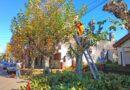 La Comuna libreña realiza podas selectivas de árboles en la ciudad