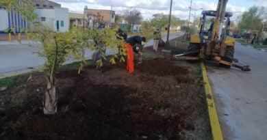 La gestión de Ascúa comenzó a plantar palmeras en la parte nueva de avenida Di Tomaso